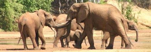 Elephant-groups.jpg
