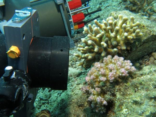 underwater-microscope-1024x768.jpg