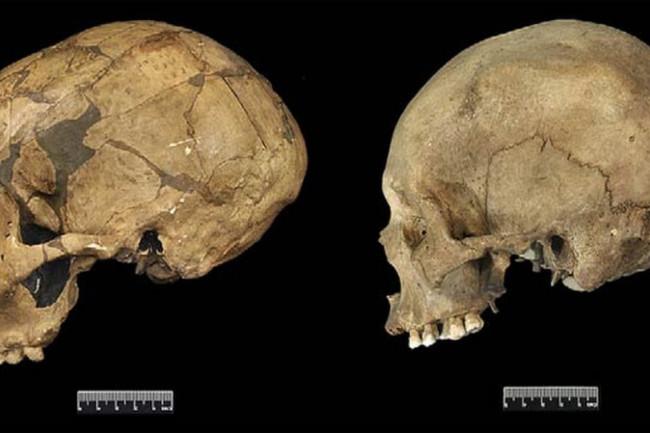 Neanderthal vs Human Skulls - J Human Evol