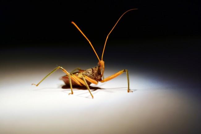 assassin-bug-1-1024x683.jpg