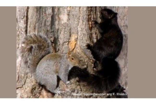 squirrelmapper