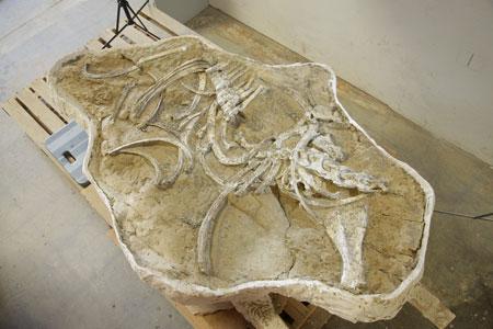 horsefossil.jpg
