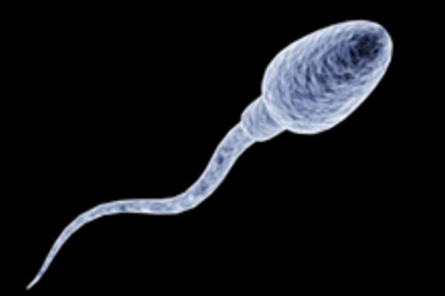 sperm220.jpg