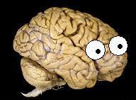 neuroskeptic.jpg