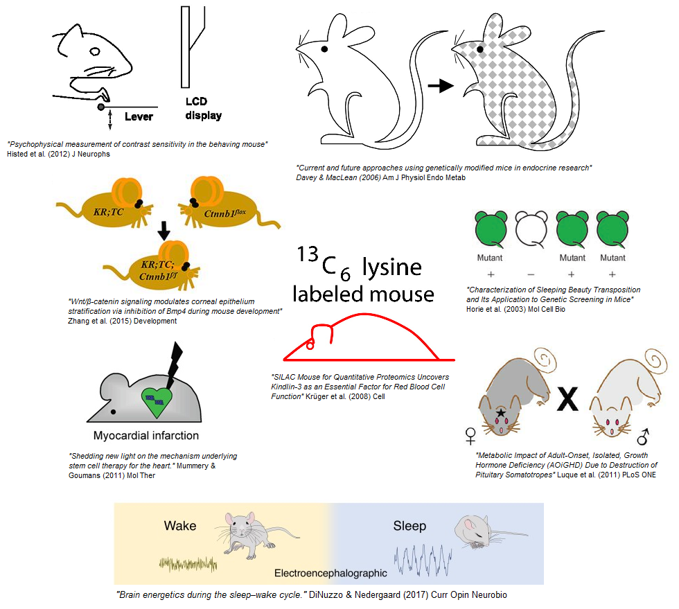 science_mice.png