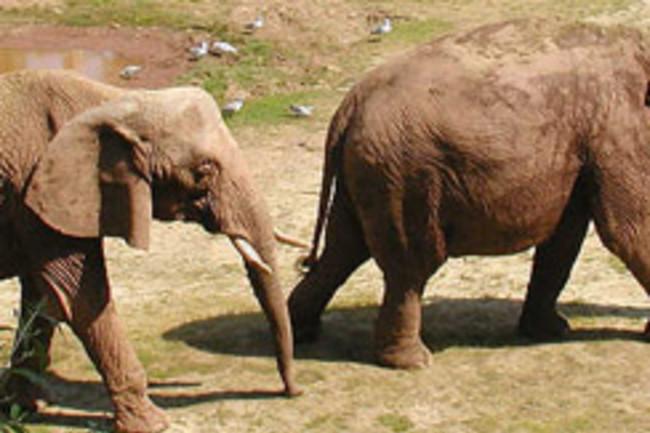 Elephantzoo.jpg