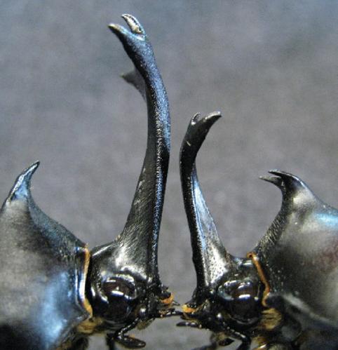 knockdown-beetles.png