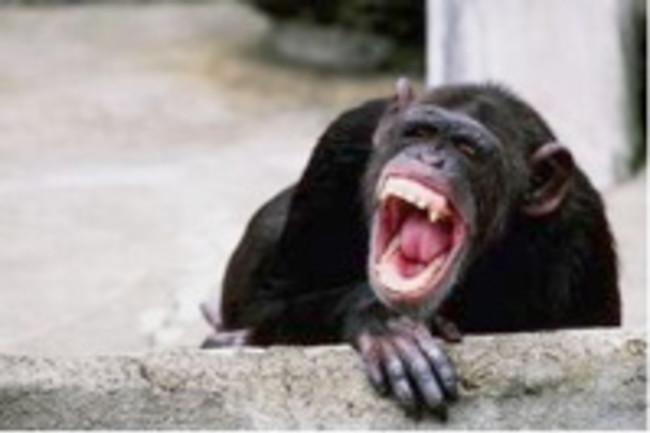 chimpanzee%20mouth.jpg