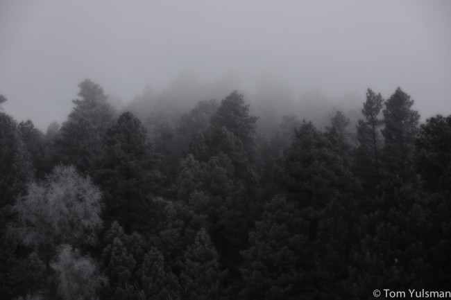 Trees-1024x682.jpg