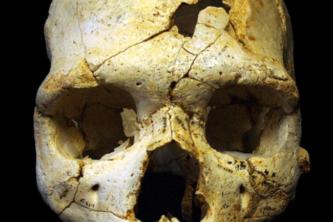 Sima-de-los-Huesos-Skull-904x1024