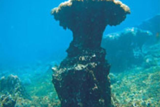 coral-reef-structure.jpg