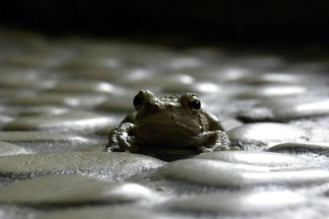 Frog_pebbles.jpg