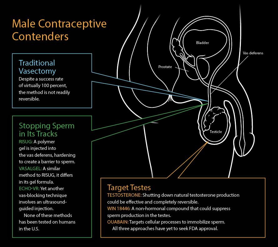 Male Contraceptive Contenders