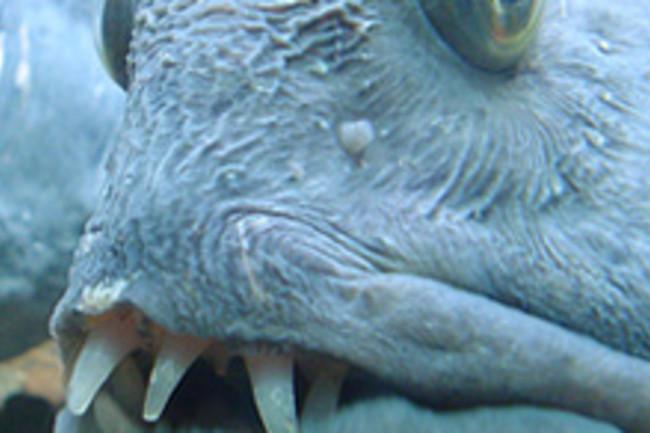 uglyfish3.jpg
