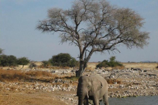 African-elephant-768x1024.jpg