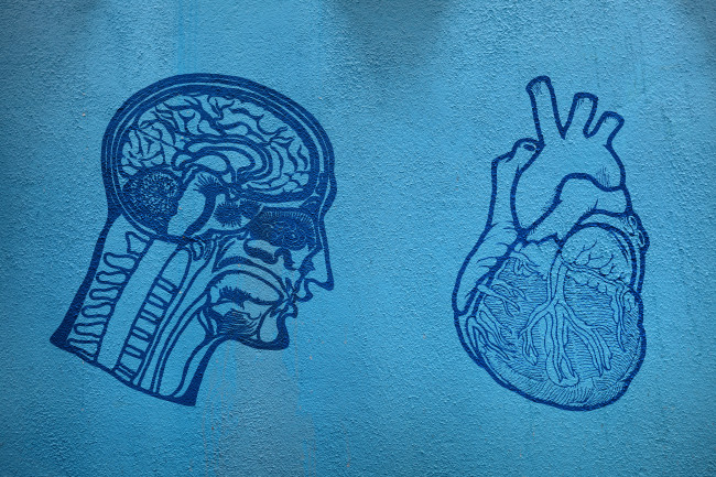 brain - heart - anatomy - drawing - shutterstock