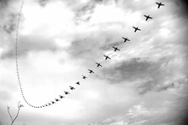 hummingbird-flight.jpg