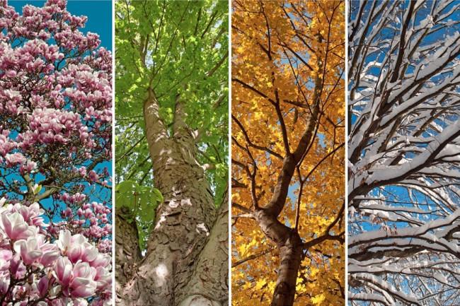 Seasons - Shutterstock