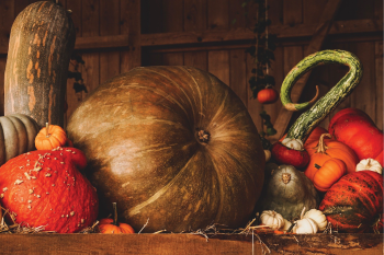 6 Ways to Dive Into the Science of Thanksgiving