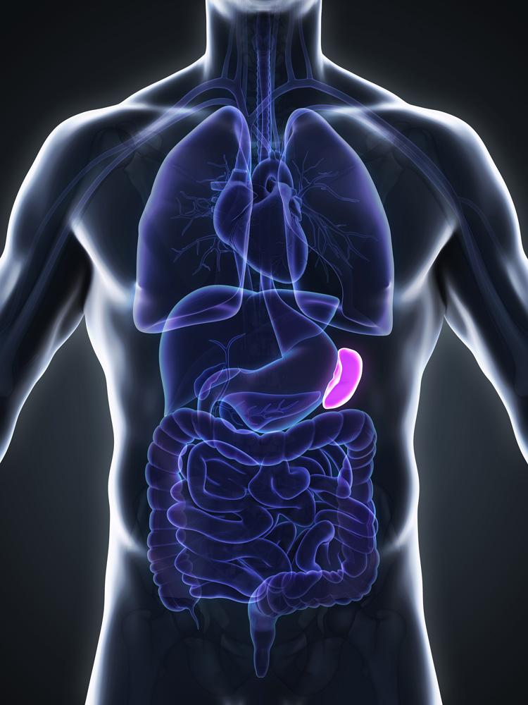 VS-spleen.jpg