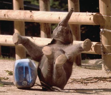 funny-baby-elephant-drop-out-aa.jpg