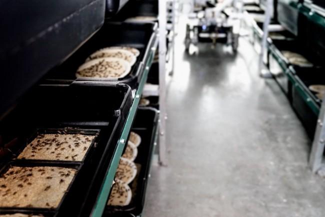 cricket bin - Aspire Food Group