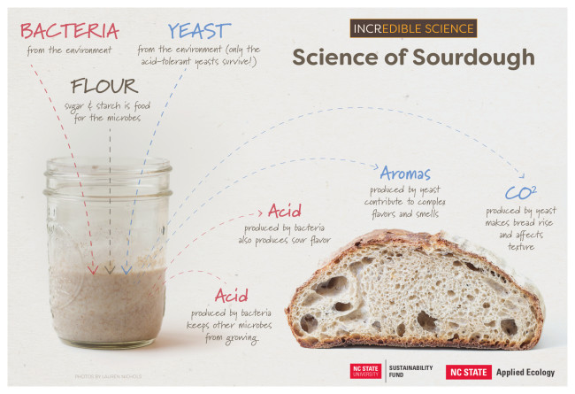 Science of Sourdough Infographic - Neil McCoy