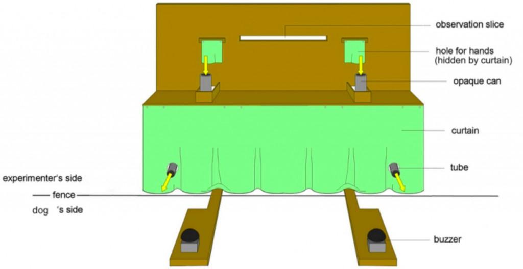 dog-setup-1024x528.jpg