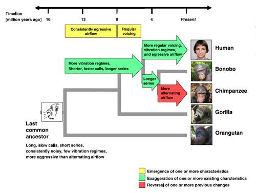 Acoustic-phylogeny.jpg