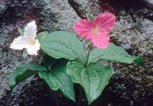 flower-300x209.jpg
