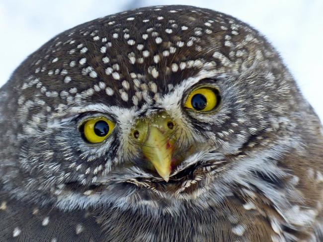 Owl -- cute