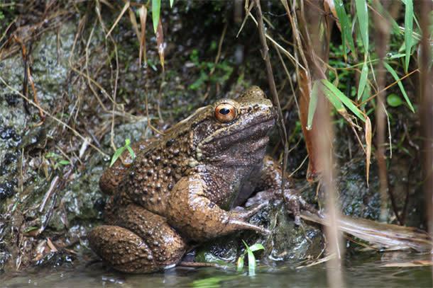 Otton_frog.jpg