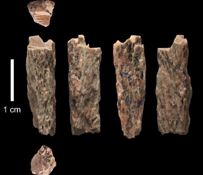 Denisovan Neanderthal Hybrid Fragments - Max Planck Institute