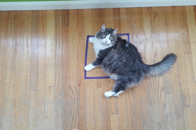 Why Felines Can't Resist the #CatSquare