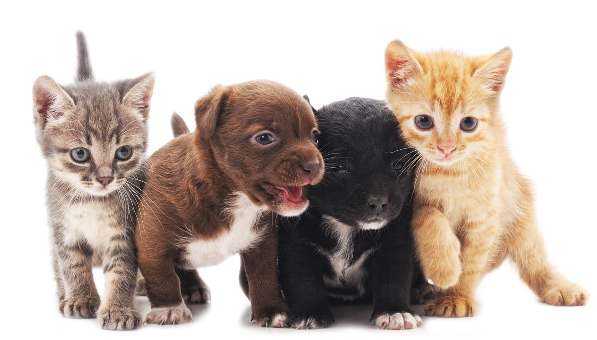Cute Animals - Shutterstock