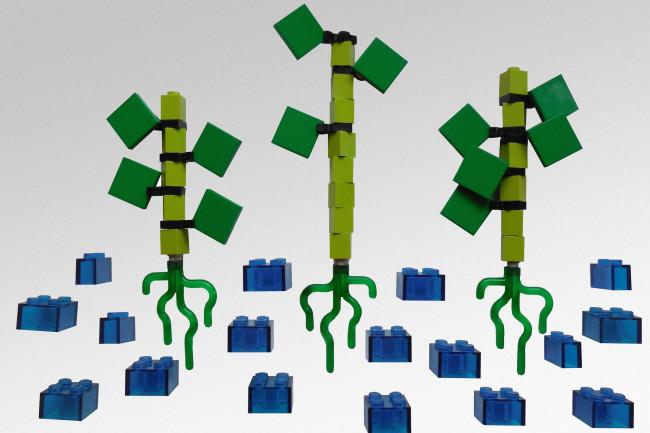 lego-plant1.jpg