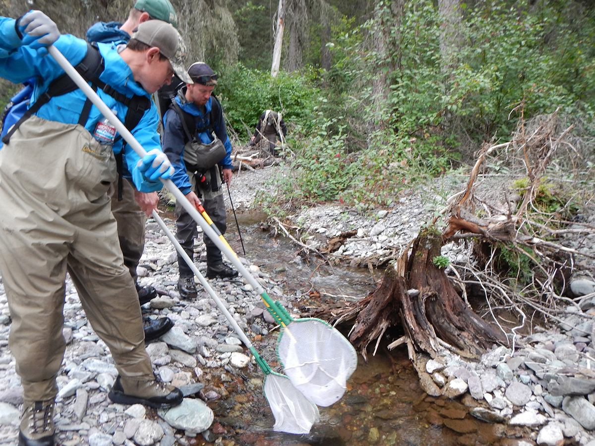 Catching Trout for Relocation - National Park Service