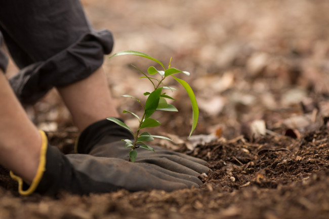 Planting Trees - Shutterstock