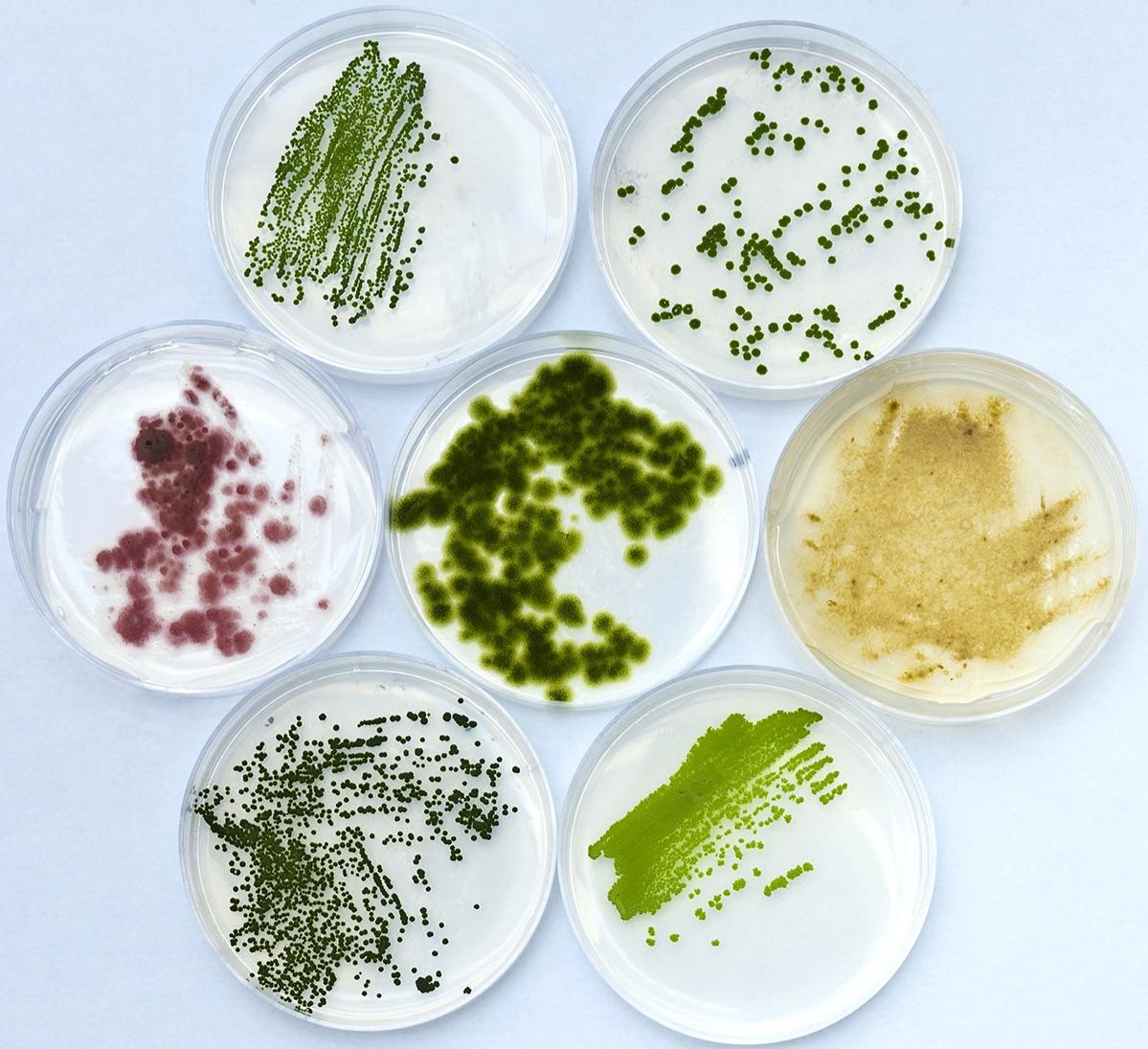 DSC-TW0719 03 algae cultures