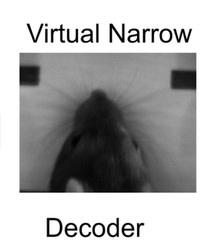 decoder-rat.jpg