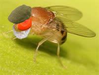 Old_fly.jpg