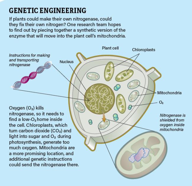 Genetic Engineering Infographic Jay Smith