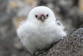One of America's Rarest Birds Lives on Alaska's Loneliest Island. Scientists Are Finally Exploring Their Private Kingdom