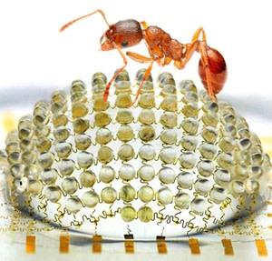 ant-eye-camera