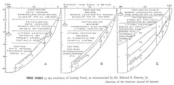 linsley-succession600.jpg