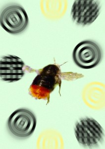Bee-with-targets-small-212x300.jpg
