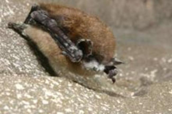 bat-and-fungus.jpg
