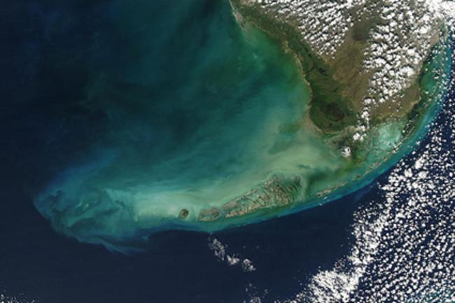 marine-algae.jpg