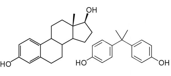 Hormone BPA endocrine disrupter