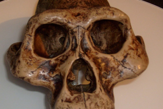 Australopithecus-afarensis-1024x999